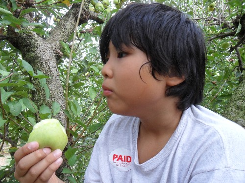 Copy of applepicking 011.jpg