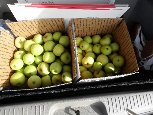 Copy of applepicking 013.jpg